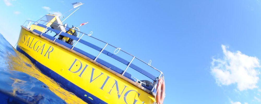 Disfrutad del privilegio de conocer el fondo marino con S'Algar Diving