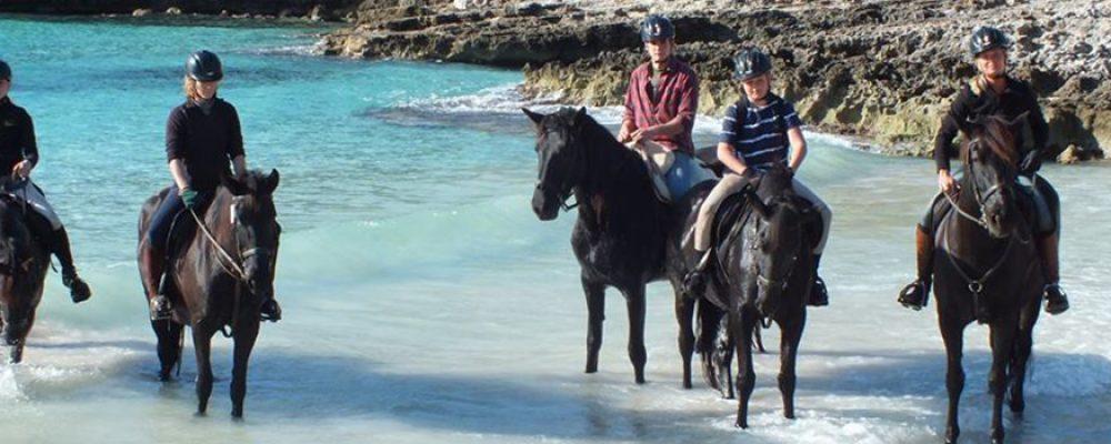 La nobleza de los caballos de raza menorquina de Rutas Ecuestres Camí de Cavalls